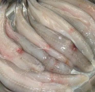 这种鱼比豆腐还要软,潮汕人餐桌上的常见菜,鲜美又营养