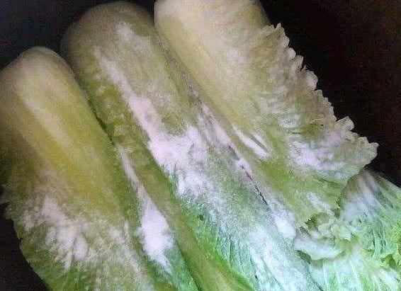 做酸菜时,还在放醋吗?1把青菜1把盐,酸菜3天就能吃