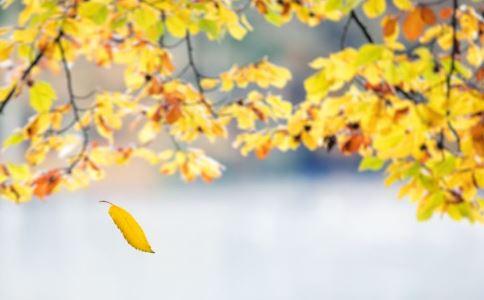 秋天吃什么菜好