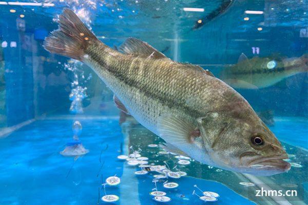 海鲈鱼产地