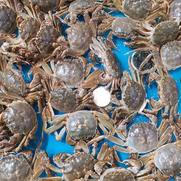 螃蟹蒸10分钟可以吗