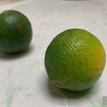 青柠檬产地