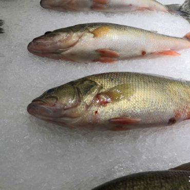 鱼有多少种