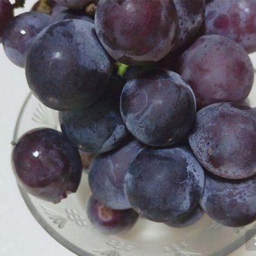 中国葡萄产地