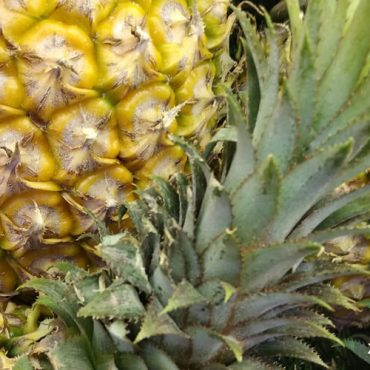 菠萝又叫什么