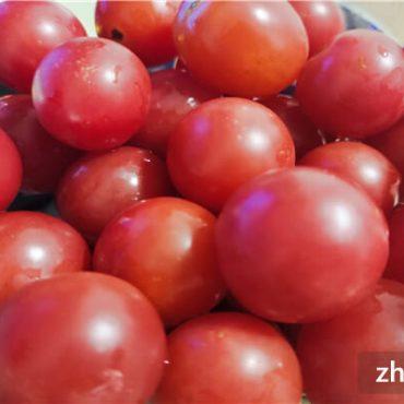小番茄多少钱一斤