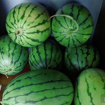 立秋吃西瓜
