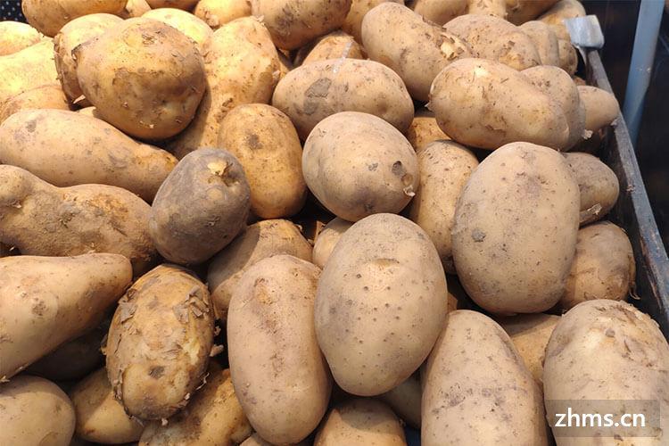 土豆长了一点点小芽可以吃吗